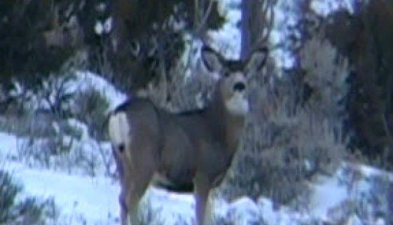 Crawford-Deer-2.jpg